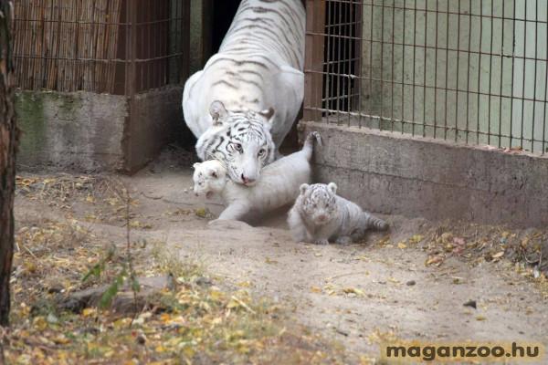 Magán Zoo